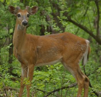 buck-15my08-1b