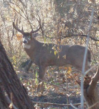 buck-mr-big-2-8no06b
