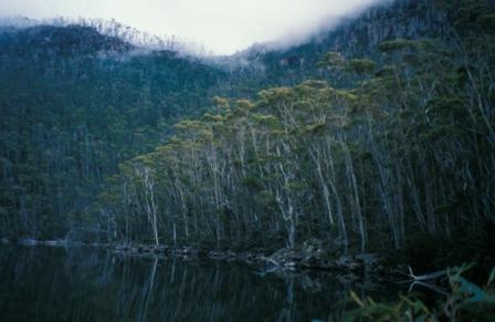 fog-trees-reflections-b