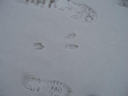 rabbit-feet-together-1b