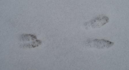 rabbit-feet-together-2b
