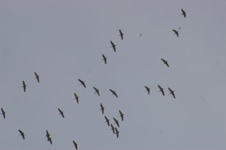 cranes-1b3