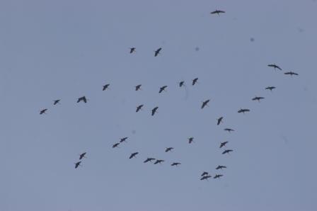 cranes-2b