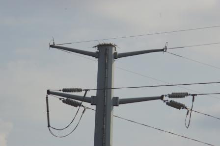 osprey-nest-b1