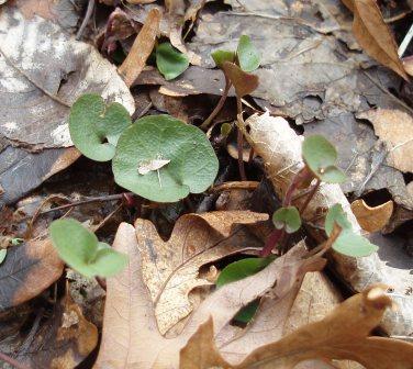 seedling-species-maybe-2b1