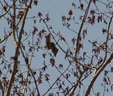 squirrel-eating-flowers-b