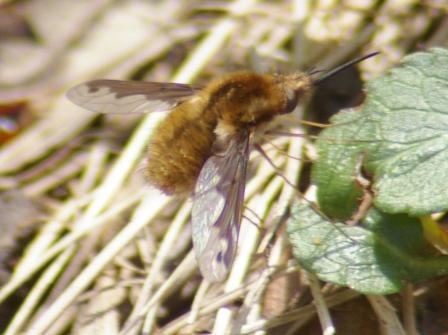 Beefly 2b