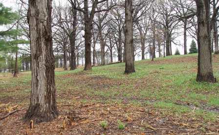 Friary hill spring 4b