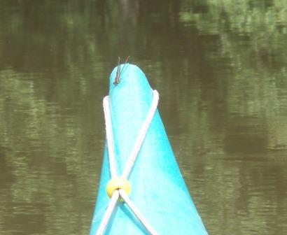 American rubyspot kayak b