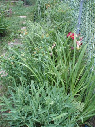 Yard 3JL 16b fence bed