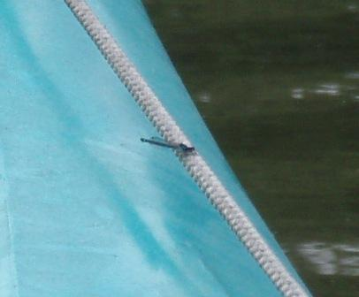 Skimming bluet 3SEb