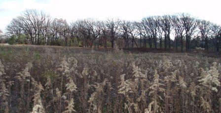 Mayslake dog meadow to savanna b