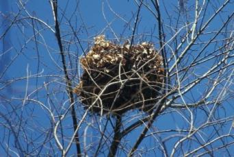 Image result for squirrel nest