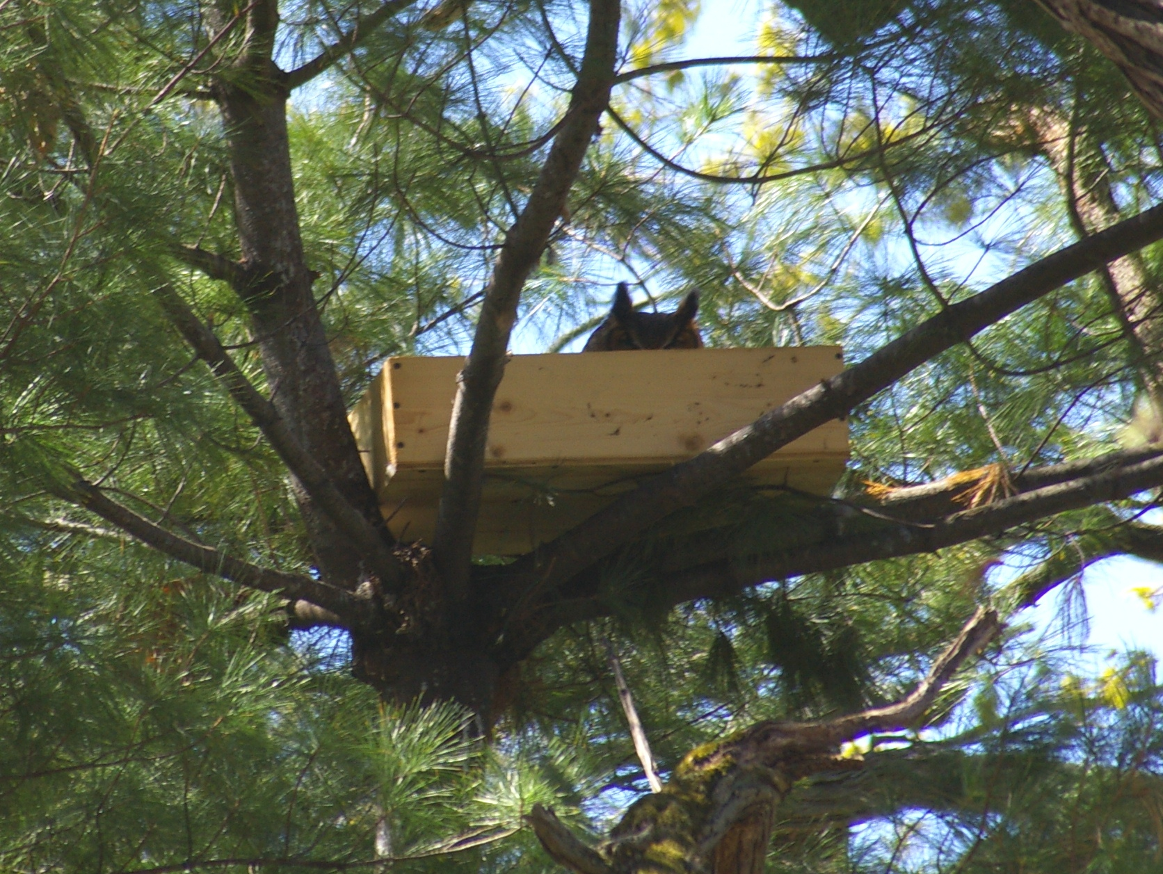 great horned owl box plans | woodwork plan resources