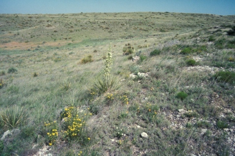 Yuccas and short grasses characterize this site.