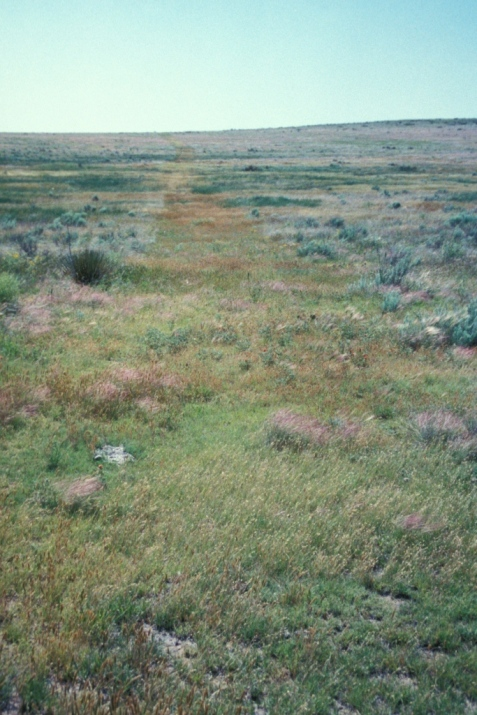 Here is another view down the length of a landscape feature, in this case the Santa Fe Trail. Even after all these decades, the trail's route is evidenced by the different color and species composition of the plants.