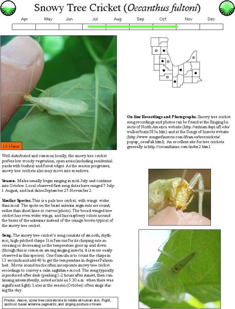 Here is an example page from the guide, for the snowy tree cricket.