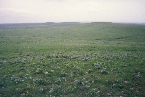 The site is large enough to give a good feel for the big sky expanse above the spread of prairie vegetation below.