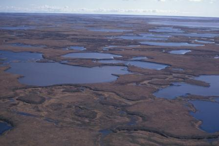 Here is an aerial view of classical upland tundra interspersed with lakes.