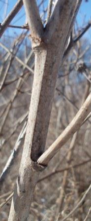The stems reach beyond 6 feet in height.