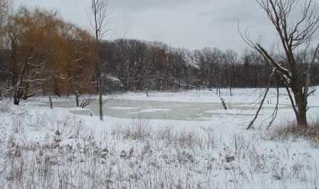 The marsh on March 6.