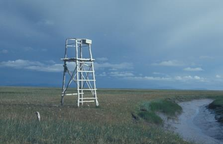 This observation tower built by Pete Mickelson, a previous researcher on the inland site, was one of several observation posts. A raven used the storage box, which was open on one side, as its overnight roost.
