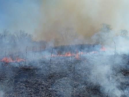 A prairie burn is an impressive thing to watch.