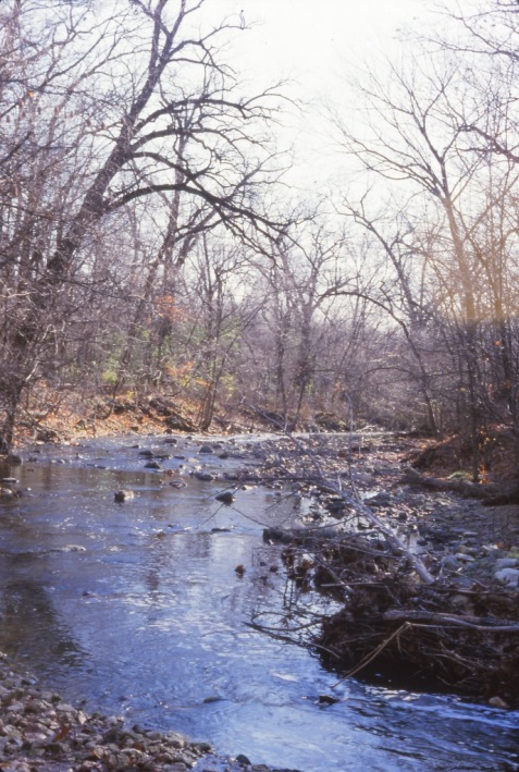 The same scene in November. Rocks and drift logs in the streambed are largely unchanged, in contrast with the vegetation.