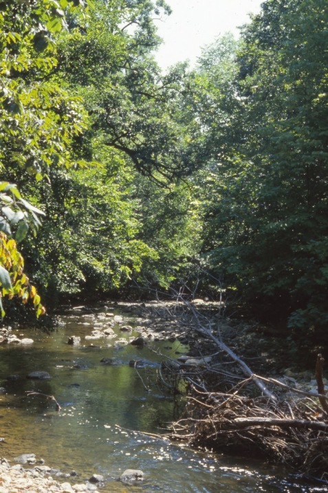 Farther downstream on Sawmill Creek in August.