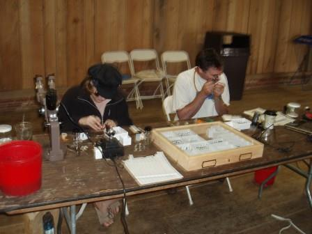 Purdue University entomologists identify beetles. Participating scientists enjoyed sharing their finds with interested members of the public.