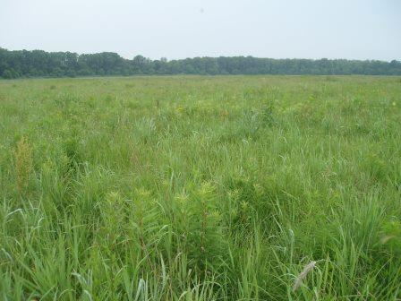 The same area at ground level. This prairie first was seeded around 5 years ago.