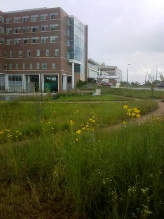 The hospital was built 3-4 years ago, and is surrounded by extensive areas planted mainly in native prairie plants.
