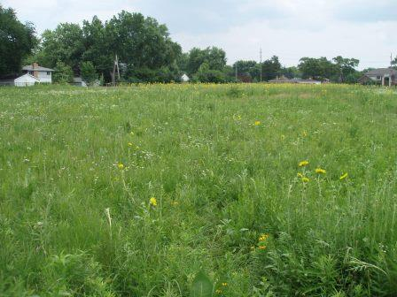 Woodworth Prairie is only 5 acres, and surrounded on all sides by residential and commercial properties. It is owned by UIC.
