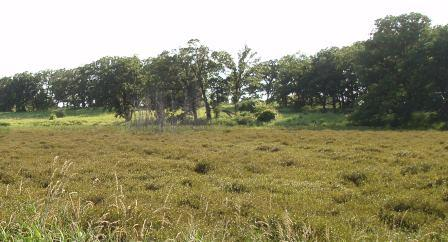 The bog so far is holding its own against a fringing ring of reed canary grass.