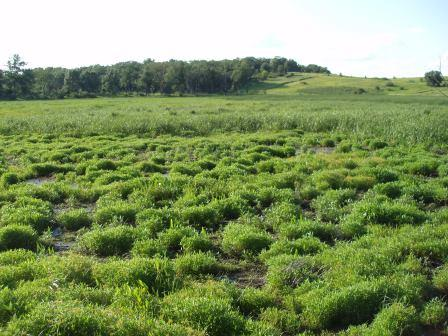 This marsh looks very good, at least around the edges.
