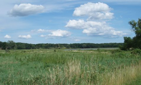 Wetlands in particular dominate the landscape.