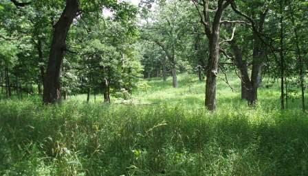 Shoe Factory Woods has some good prairie and savanna restorations going.