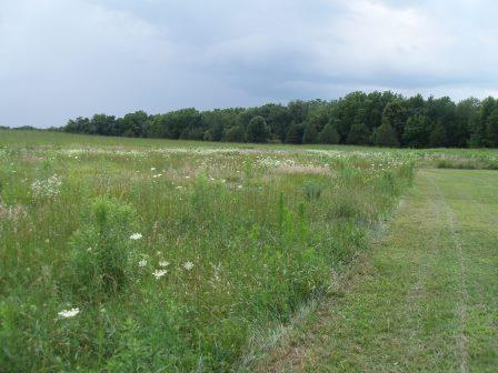 Silver Springs has good bottomland forest along the Fox River, and a wide range of open lands. This meadow had many prairie grasses mixed in.