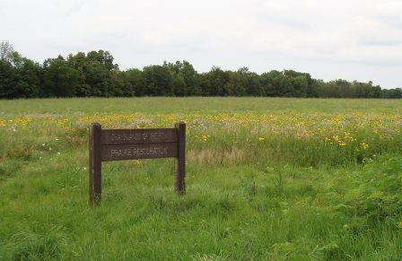 This restored prairie was one of my favorite locations, yielding several singing insect species.