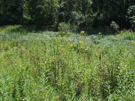 This beautiful little fen at Richard Young Forest Preserve in Kendall County is completely surrounded by woodland.