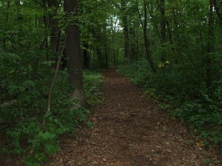 High quality forests are scattered around the region. Sanders Park, Racine County, Wisconsin.