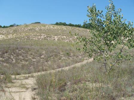 The dunes around the edge of Lake Michigan provided some of the most open habitats. Warren Dunes State Park, Michigan.