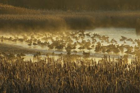Winter roost, Hidden Lake Forest Preserve