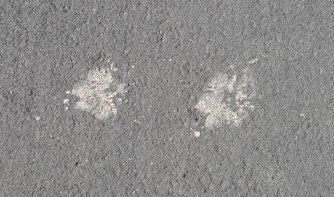 Close-up of hind and front footprints