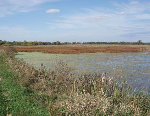 The marsh had few invasive wetland plants.