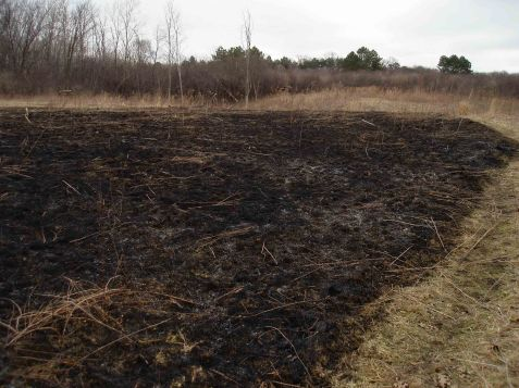 Only half of the north stream corridor prairie was burned, for instance.