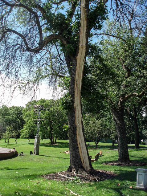 The strike did not simply create a wound, it blasted out one side of the tree.