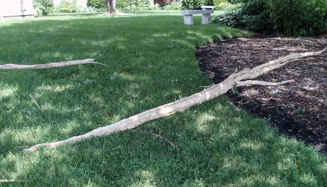 This heavy, pointed piece more than 15 feet long was thrown 50 feet away from the tree.