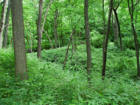My first stop was Richard Young Forest Preserve in Kendall County.