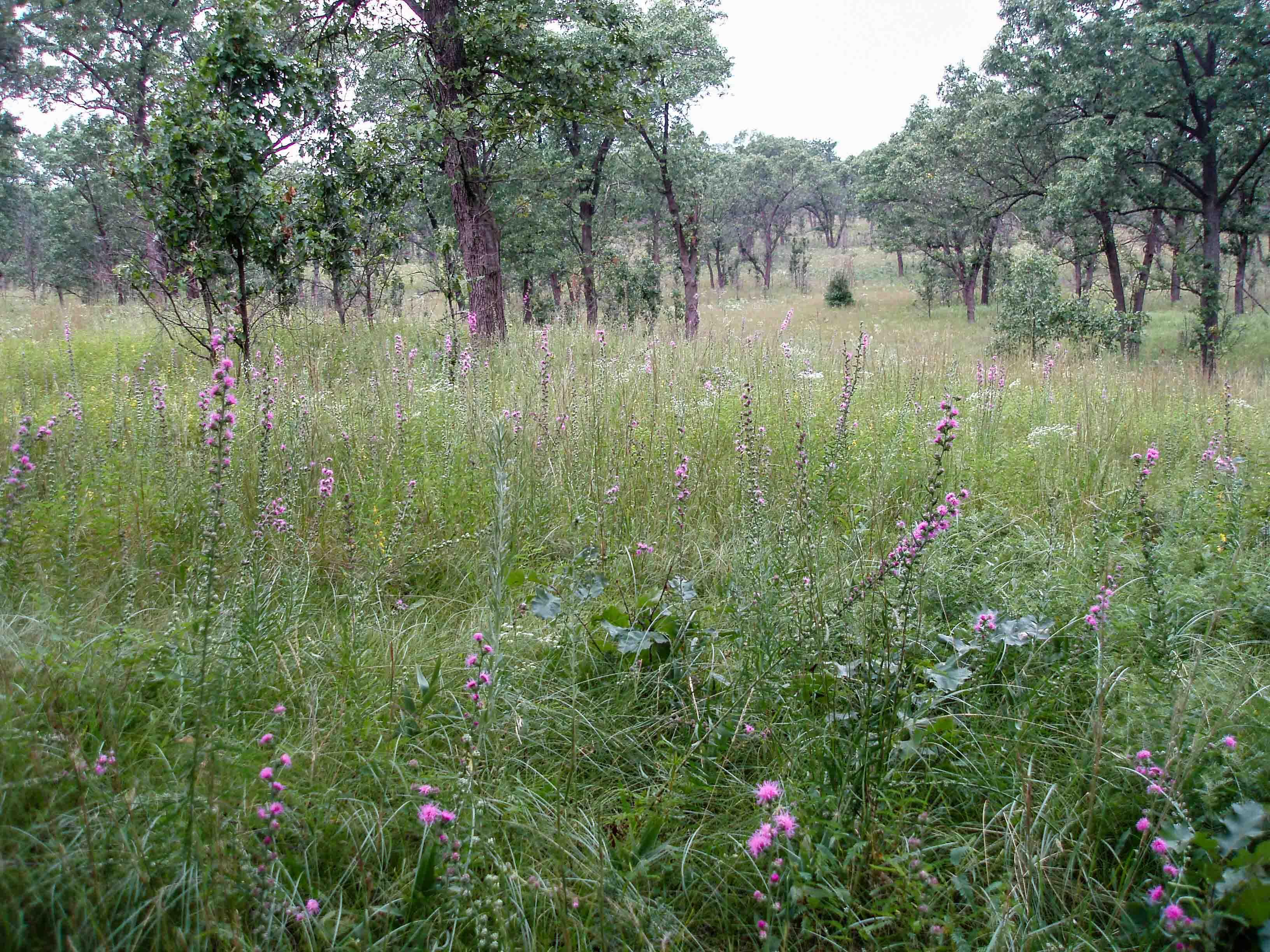 Prairie Ecosystem Gizmo Key Kankakee Sands Il A